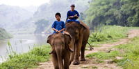 Become an elephant mahout in the legendary Golden Triangle