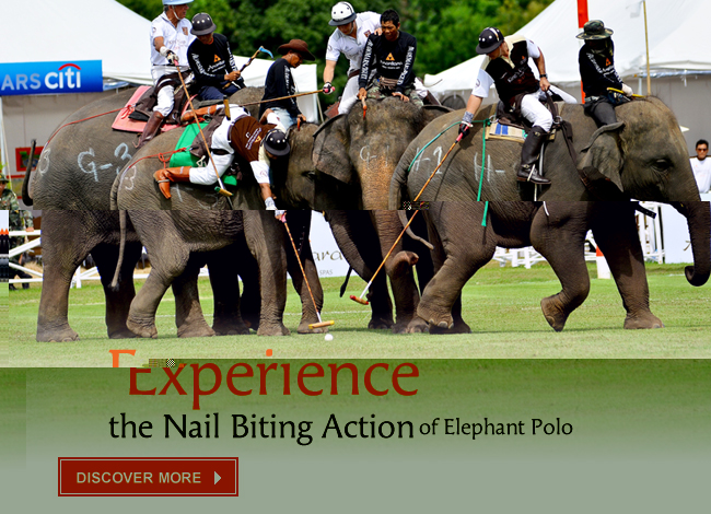 Experience the Nail Biting Action of Elephant Polo